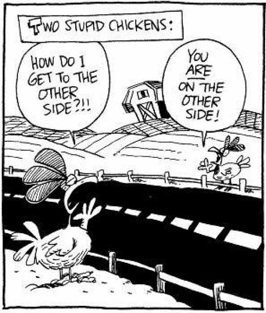 Two Stupid Chickens